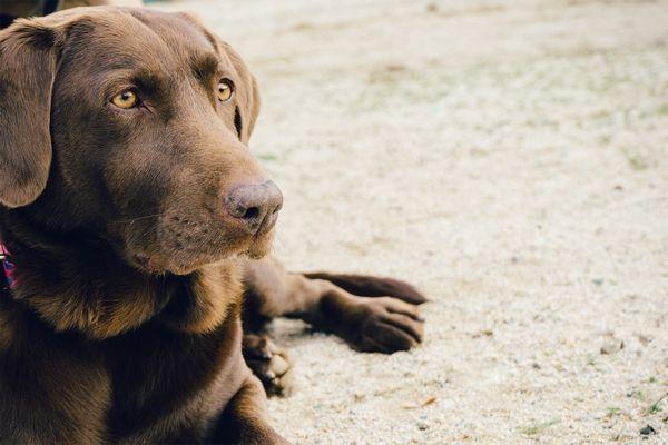 Állatorvosi ügyelet Pilisvörösvár