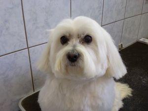 Pilisvörösvár Kutyakozmetika