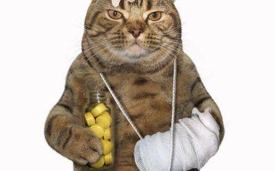 Hogyan adjuk be a tablettát a cicának?