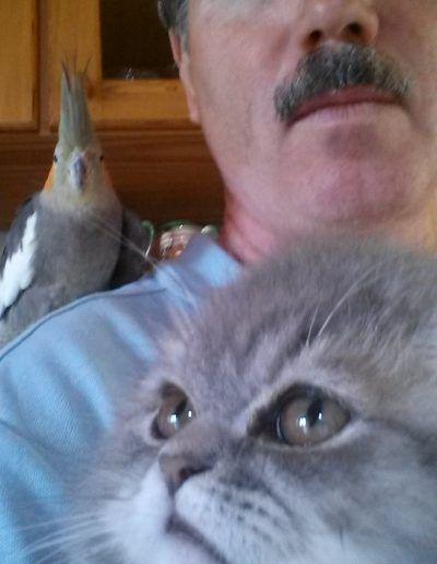 Lala a nimfapapagáj és a nálunk nyaraló perzsa cica