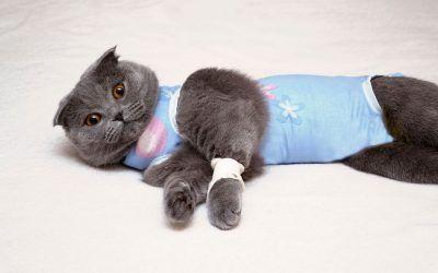 Macska ivartalanításról