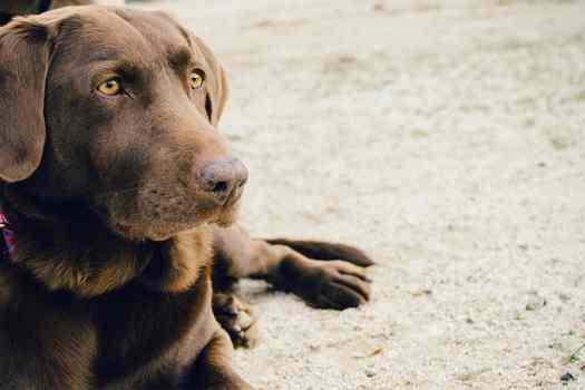 Pilisvörösvár állatorvosi ügyelet