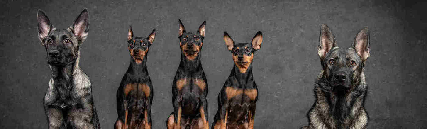 Pilisvörösvári állatorvos kutyák